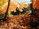 Needham Foliage