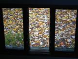 Looking Out at Fall