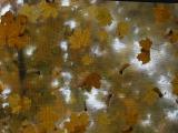 Autumn Skylight