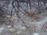 Longwood Reflection