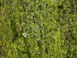 Tapestry of Lichens