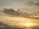 Soaring at Sunrise