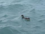 Swimming in Lake Michigan