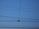 Belmont Wires