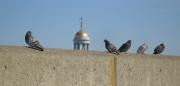 Line of Pigeons