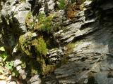 Moss on Sedimentary Rock