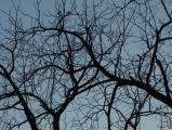 Silhouette of Twisty Branches