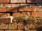 Bricks and Grass