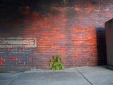Along the Brick Wall