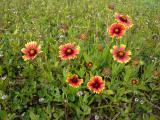 Crimson and Yellow Flowers