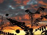 Plants and Sunset