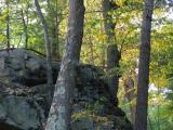 Rock and Trees