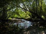 Arching Trees, Bending Brook