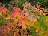 Bright Autumn Garden