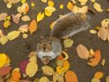 November Squirrel