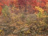 Roadside Autumn