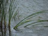 Angled Reeds