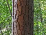 Bark Shading