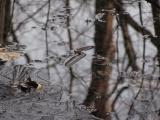 Reflection of a Frozen Tree