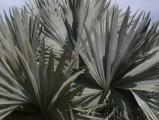 Cluster of Fronds