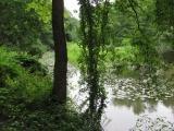 Wedgemere Greenery