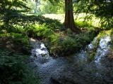 Stream at the Arboretum