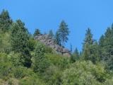 Tree Overlooking