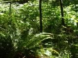 Among the Ferns