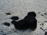 Rocks in Nahant Bay