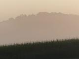 Kentucky Fog