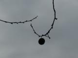 Spherical Pod