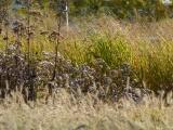Mystic Grasses