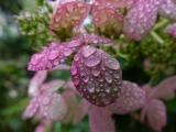 Raindrops in the Garden