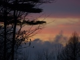 Evergreen with Pastel Sunset