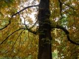 Berlin Autumn