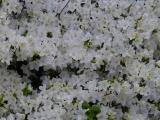 Flowers near Union Station