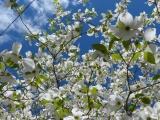 Trowbridge Flowers