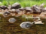 River Rock Reflections