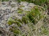 Moss Congregating on a Rock