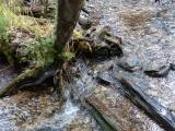 Tree Roots and Mountain Stream