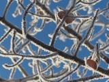 White Branch Labyrinth
