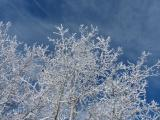 Frost in the Sky