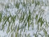 Snow Sprinkled Spring
