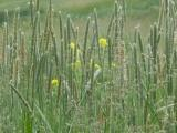 June Seeds