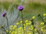 Wildflowers in June