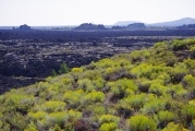 Yellow Flowers and Lava Field
