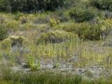 Plant Varieties near Lone Pine