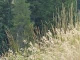 Plants on a Hillside