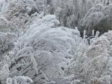 Frosted Plants V