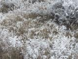 Frosted Plants VI